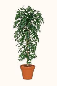 kunst-plant
